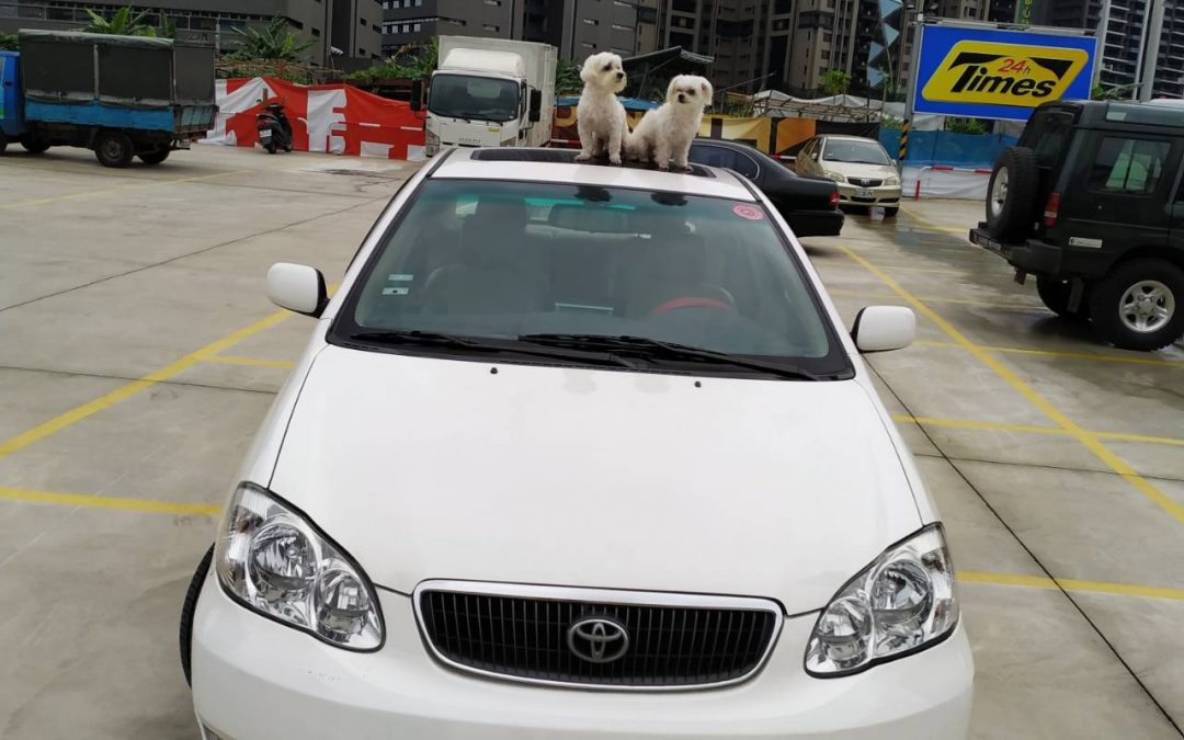 台北寵物包車、萌狗包車一日遊、寵物包車推薦